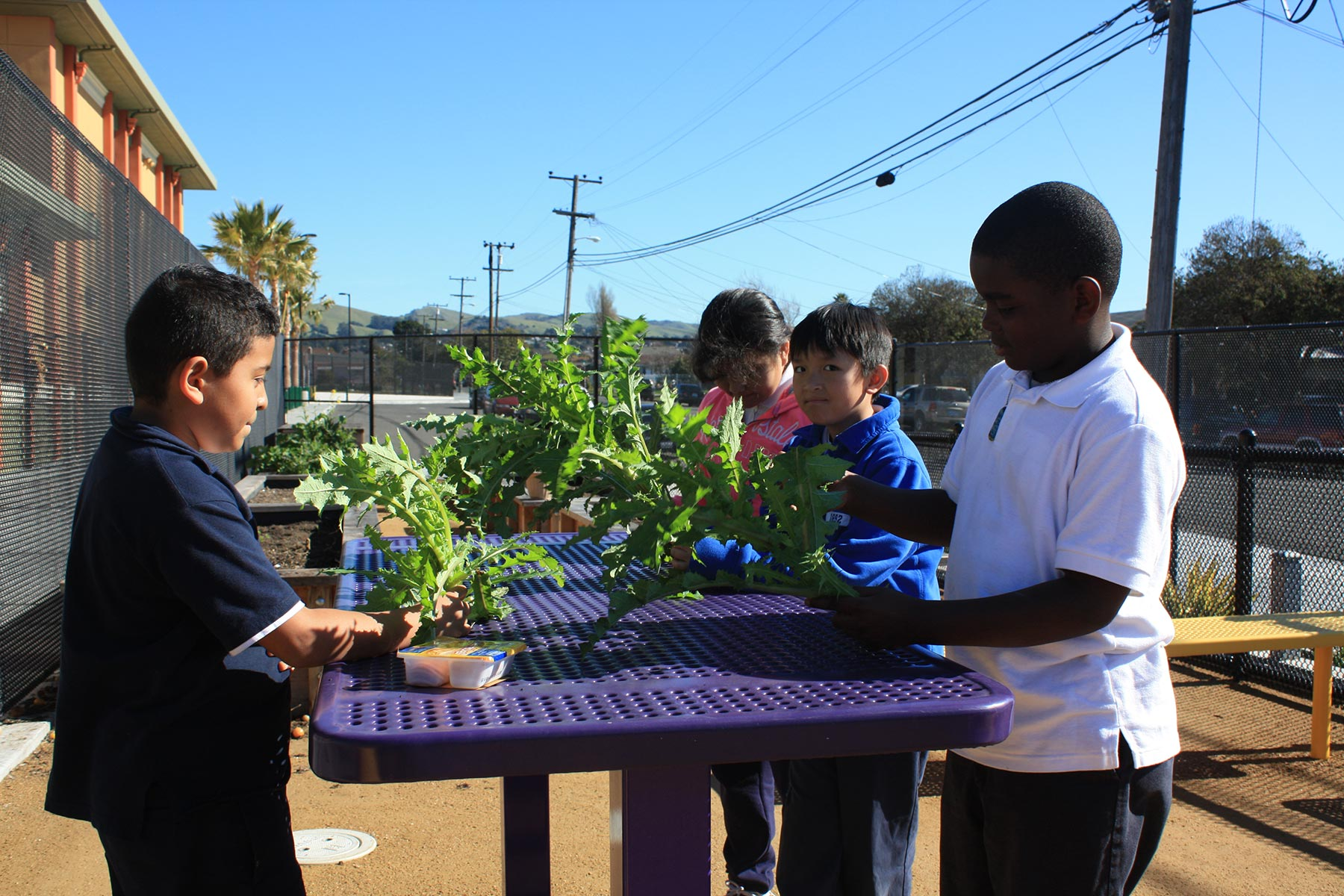 Sustainable Design Services - Ford Elementary School Garden 2