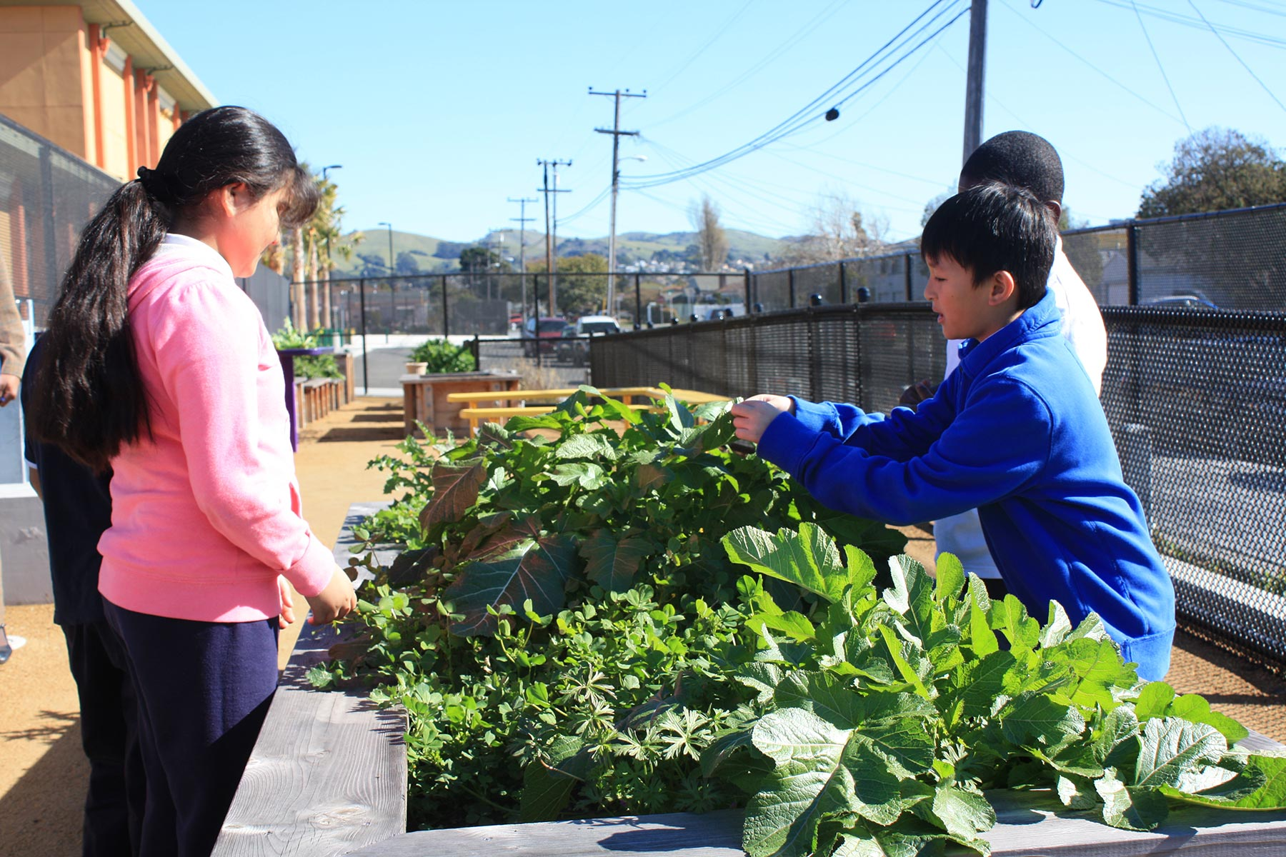 Sustainable Design Services - Ford Elementary School Garden 3